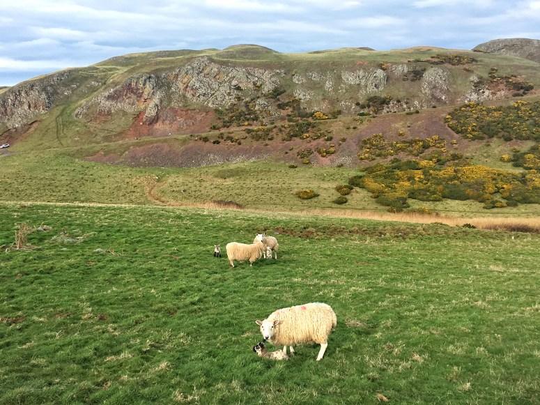 St Abbs, Scottish Borders