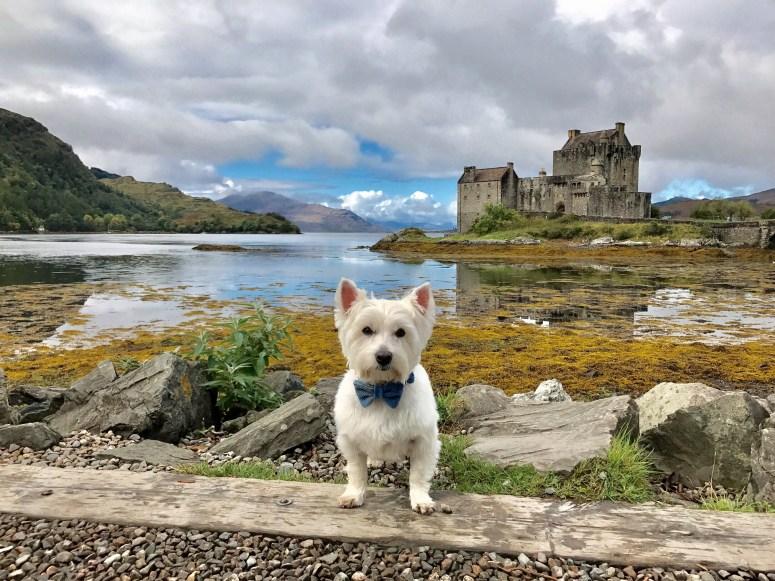 Westie at a castle