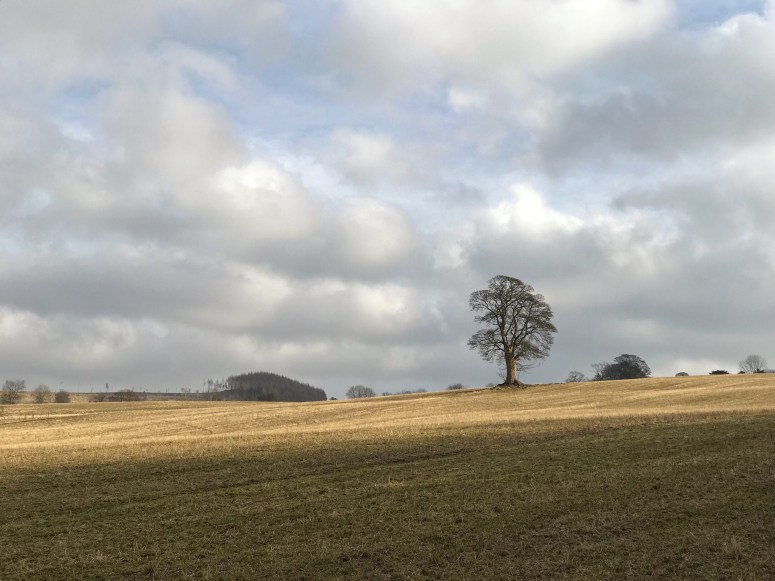 Moulin Walk Perthshire