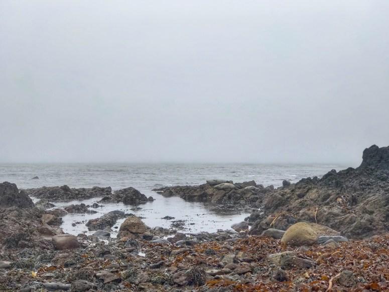 Seals, Southend, Kintyre Peninsula