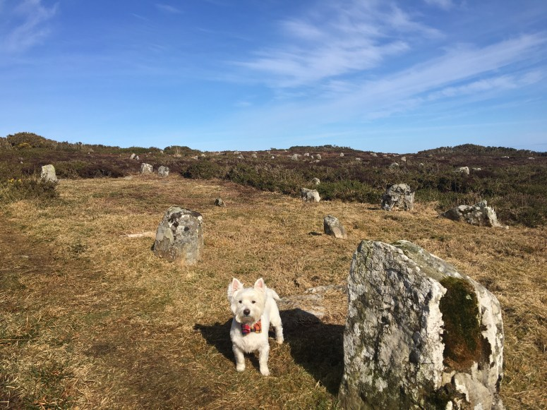 Hill o' Many Stanes, Caithness