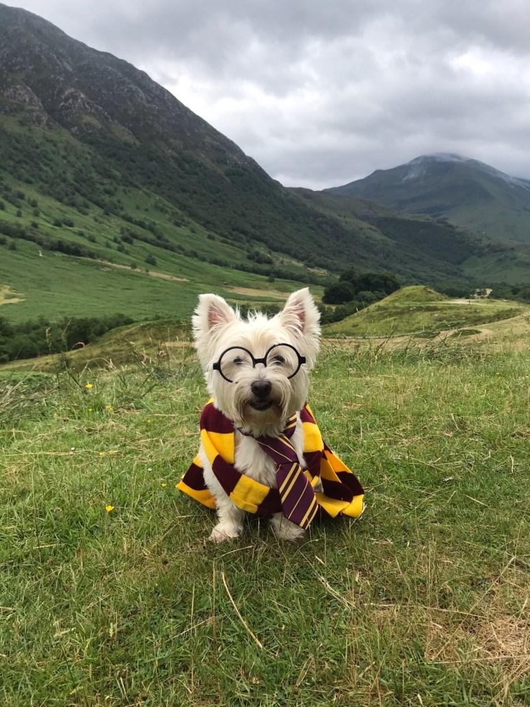The real Hogwarts Express