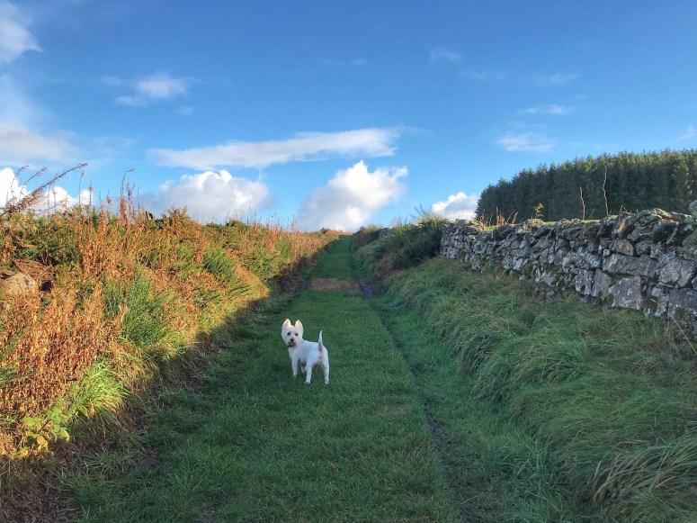 Aikey Brae Stone Circle, Aberdeenshire