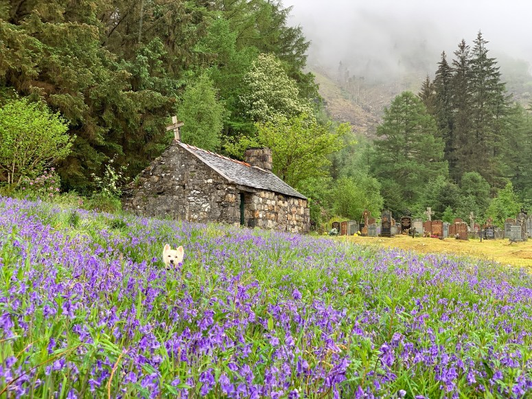 Bluebells, Ballachulish