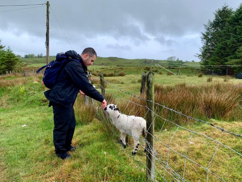 Spring lambs Lismore