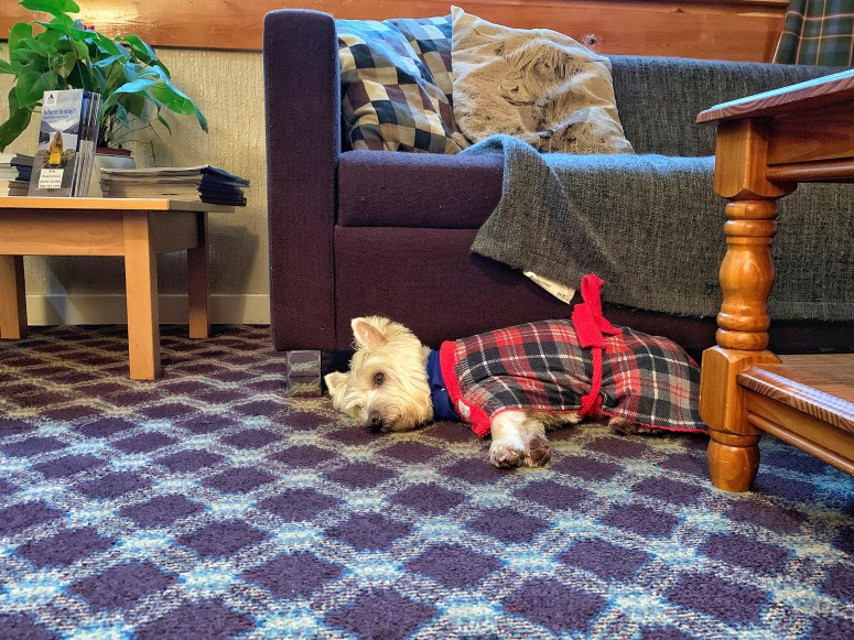 Dog-friendly Hostelling Scotland