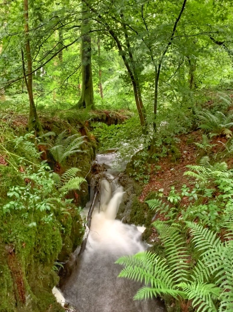 Cally Woods, Galloway Forest Park