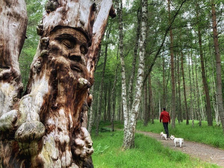 Walks in the Cairngorms, Frank Bruce Sculpture Trail