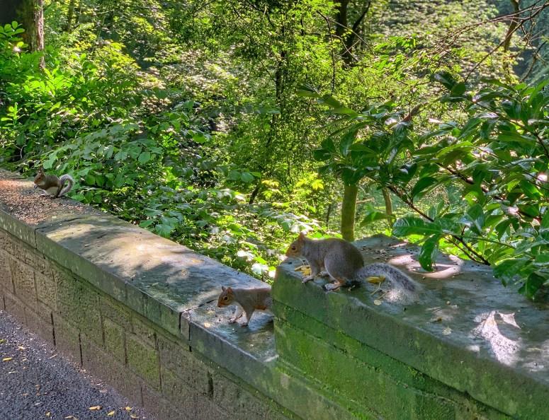 Squirrels Pittencrieff Park