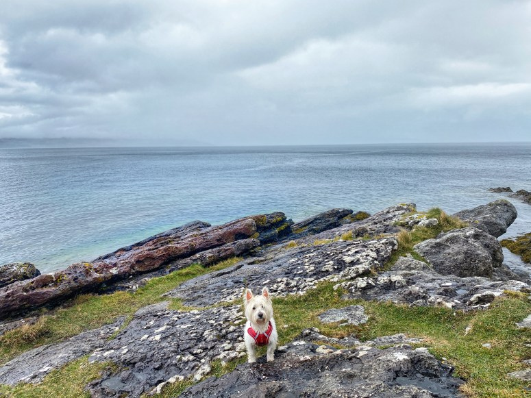 Hutton's Unconformity, Isle of Arran