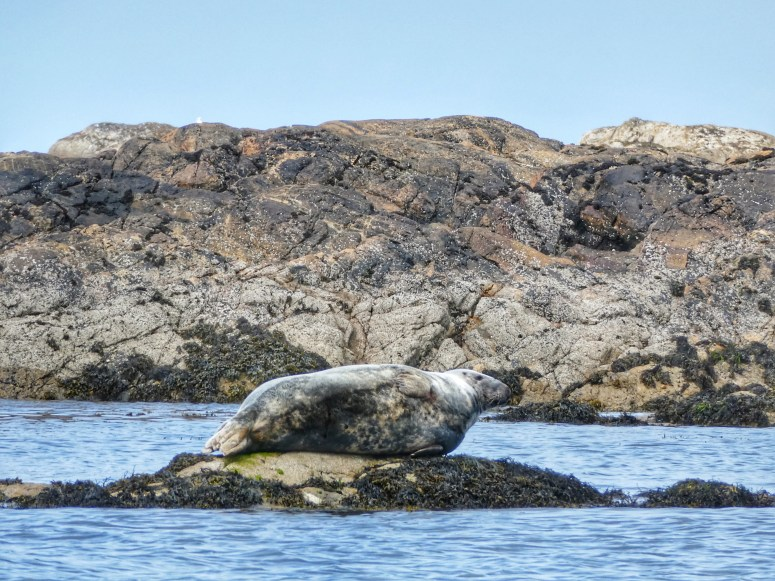 Wildlife watching, Isle of Coll