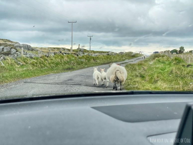 Single track road, Isle of Coll