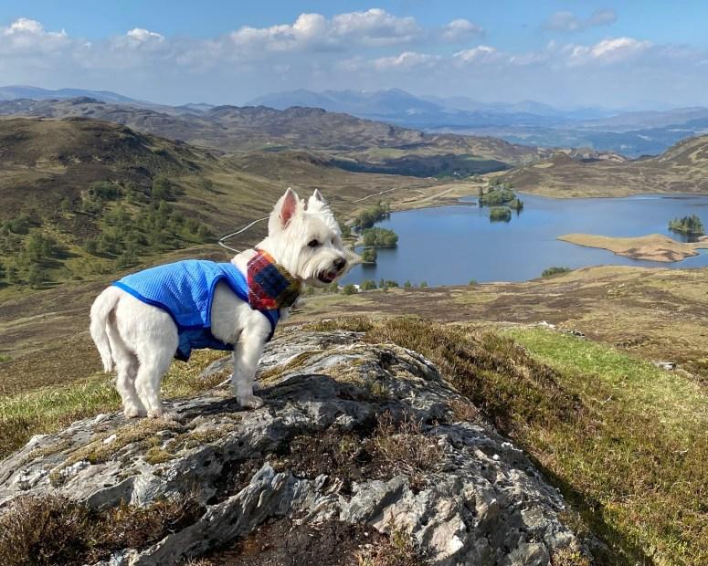 Loch Tarff Viewpoint. visit south Loch Ness