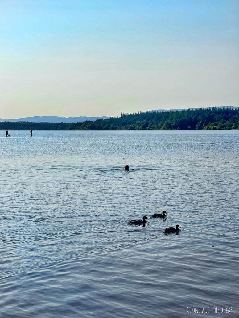 Wild swimming Loch Morlich