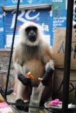 Monkey eating fried goods