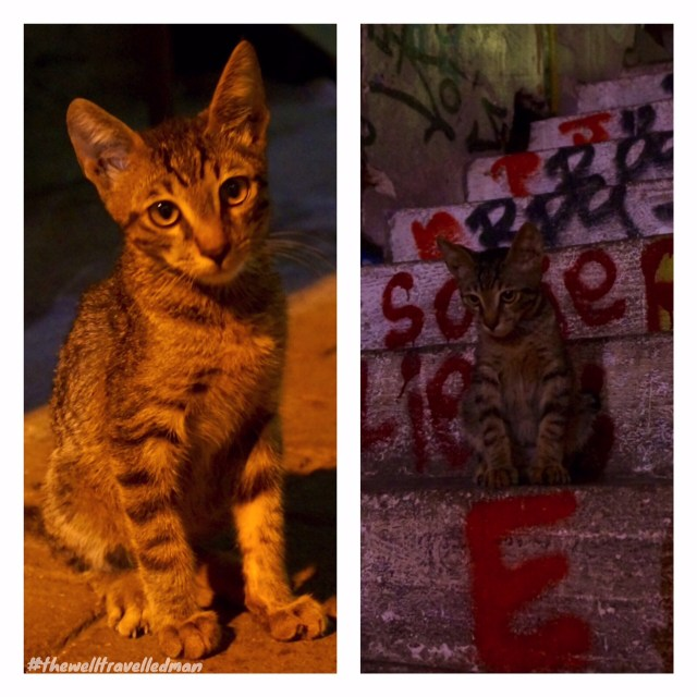 thewelltravelledman athens cats and graffiti