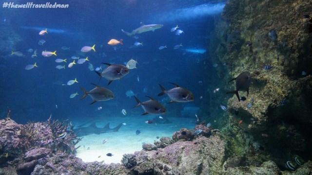 thewelltravelledman sydney sea life