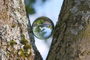 It is What You Say it is: The Pivotal Power of Perspective