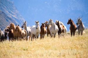 Wild Horse fertility program