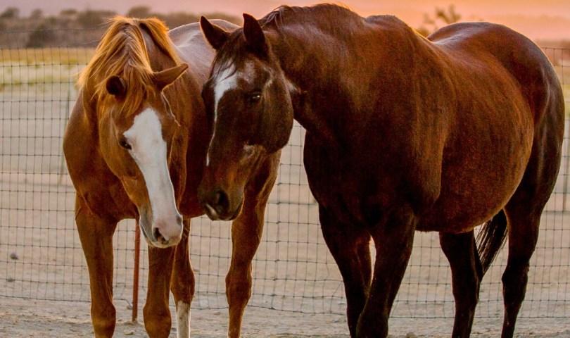 Horses find forever home