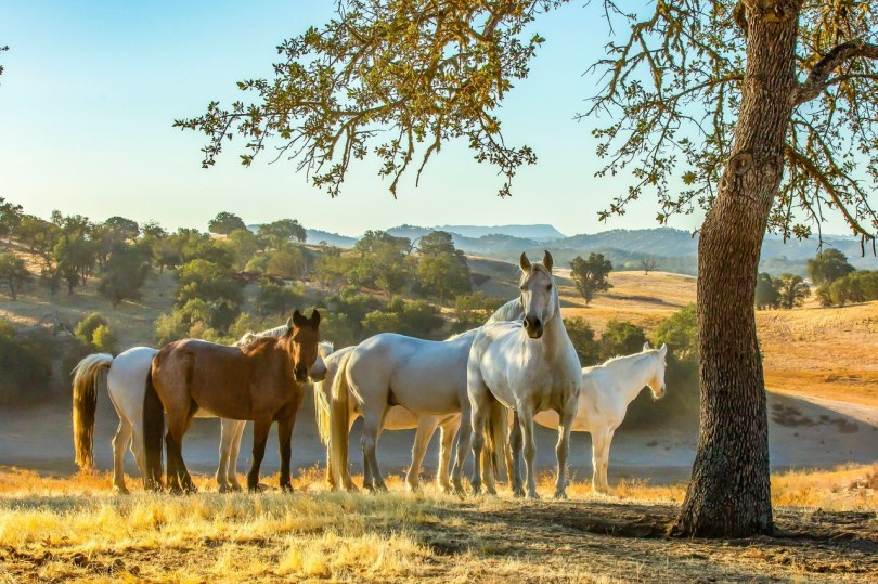 Horses find forever homes