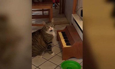 Tabby cat plays piano to convey owners he's hungry