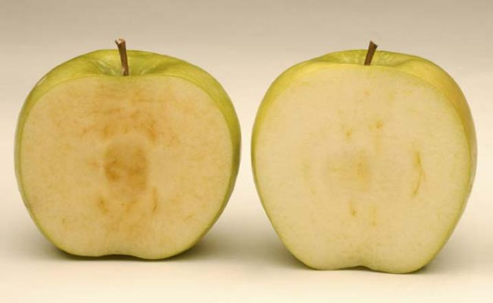 U.S. approves of genetically modified apples that do not turn brown
