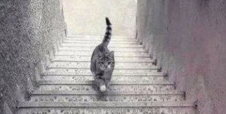 cat image upstairs or downstairs #catgate