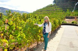 The Whet Palette Napa Valley Wine Country Itineraries-13