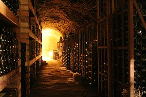 Has anyone ever Googled The Whine Cellar or The Wine Seller looking for this site?