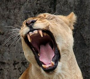 In like a lion, out like a BAM! (On setting completely arbitrary goals to motivate yourself)