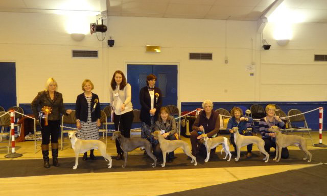 Whippet Club Limited Dog Show - 2014