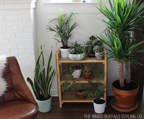 gardening-inside