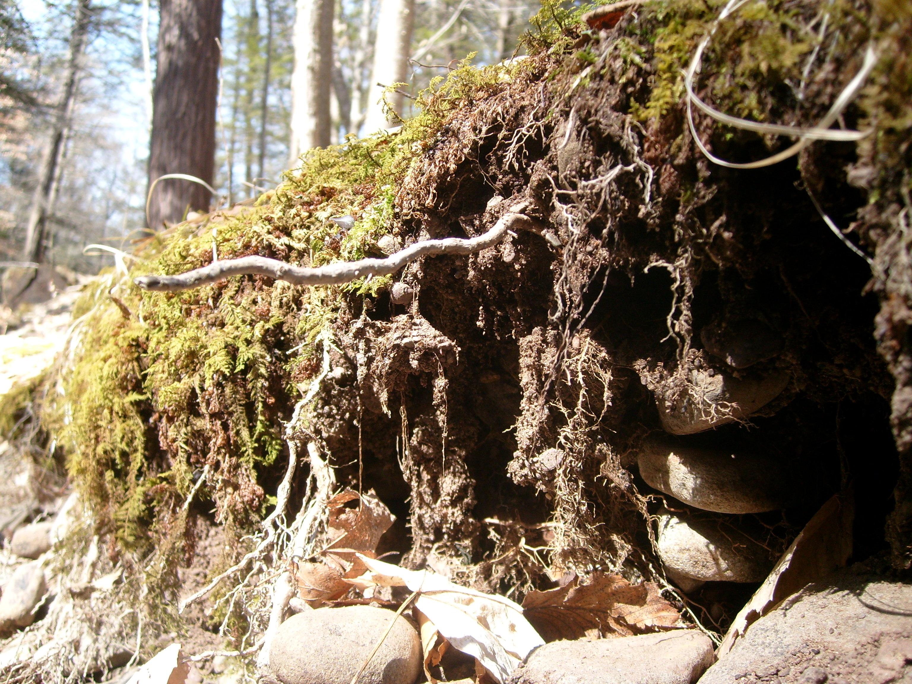 Goblins Under Tree Stumps #1