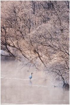 Hokkaido Cranes 12