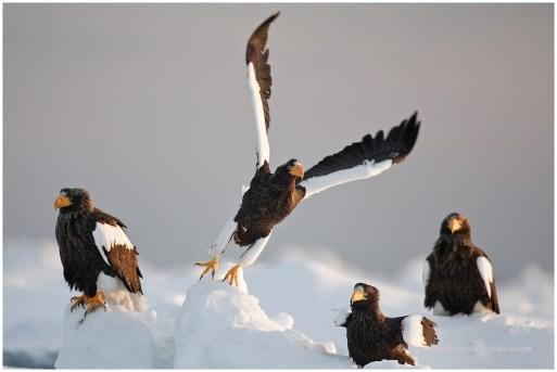 Hokkaido Eagles 13
