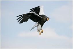 Hokkaido Eagles 23