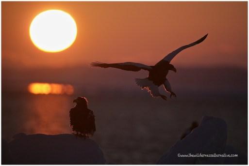 Hokkaido Eagles 24