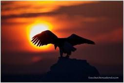 Hokkaido Eagles 3