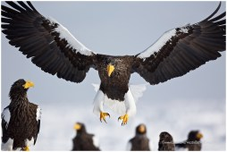Hokkaido Eagles 5