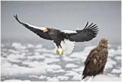 Hokkaido Eagles 7
