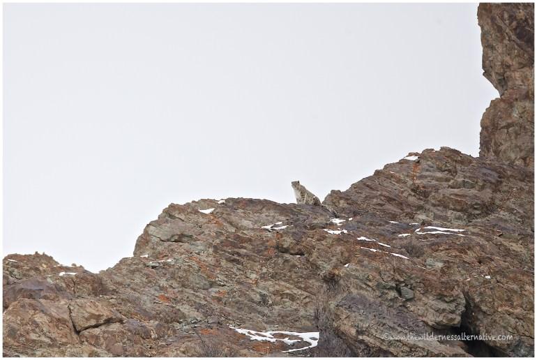 Ladakh 28
