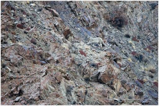 Ladakh 9
