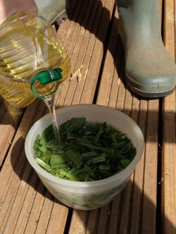 Cover herb with base oil