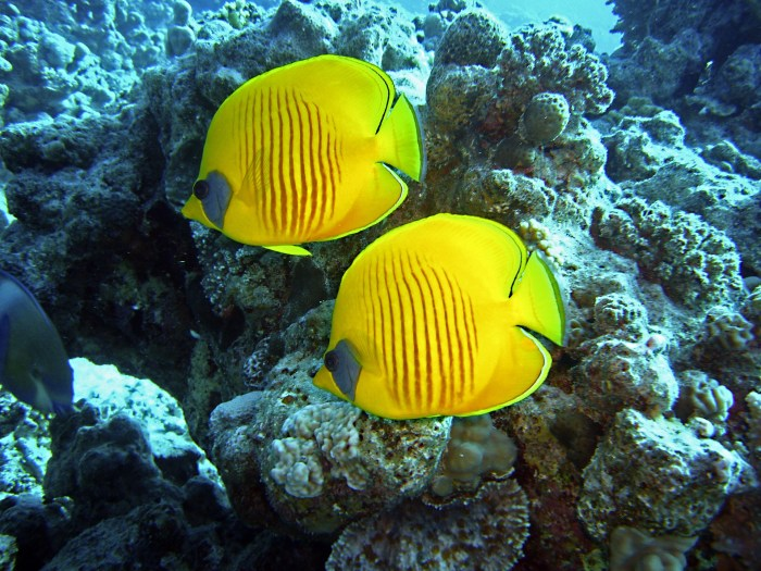 diving-1656619_1920