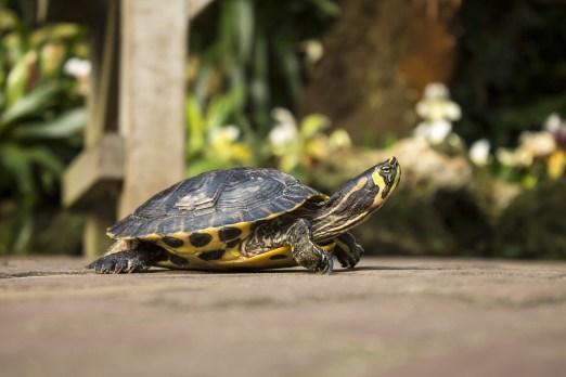 turtle-642109_1920.jpg
