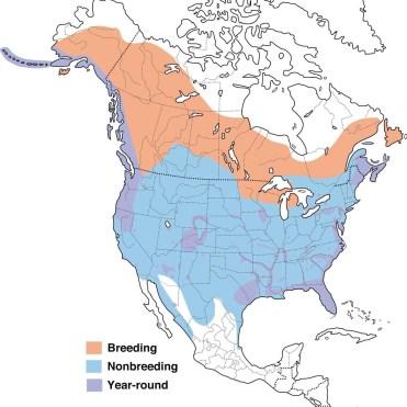 Bald Eagle Range Map