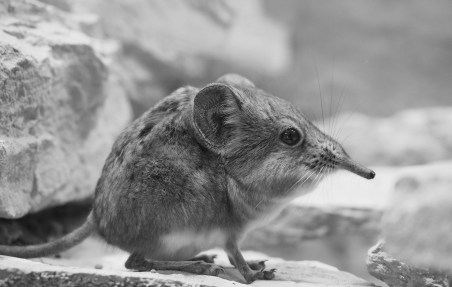 elephant-shrews-1358758_1920