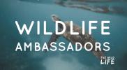 Become a Wildlife Ambassador