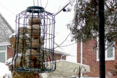 fatball feeder in winter